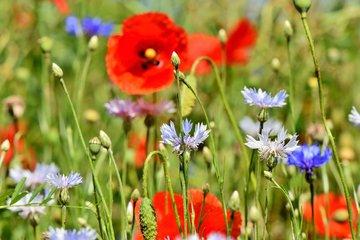 Bloemenmengsel zaden