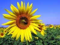 Bloemen positief voor de moestuin!