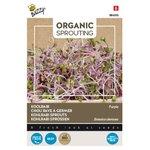 Koolrabi als spruitgroente kopen | Organic Sprouting