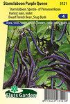 Bonen zaden kopen, Purple Queen, Paarse boon | Moestuinland