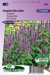 Dropplant zaden kopen, Blue Spikes | Moestuinland