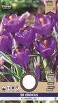 Krokus bloembollen kopen, Flower Record Paars (Najaar) | Moestuinland