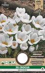 Krokus bloembollen kopen, Ard Schenk Krokus najaar | Moestuinland