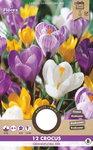 Krokus bloembollen kopen, Grootbloemig gemengd | Moestuinland