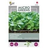 Citroenbasilicum Zaden Kopen, Micro Greens | Moestuinland