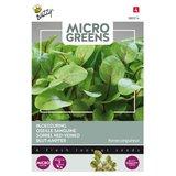 Bloedzuring zaden Kopen, Micro Greens   Moestuinland