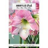 amaryllis bloembol kopen bij moestuinland