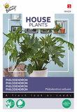 Philodendron zaden kopen, Kamerplanten | Moestuinland