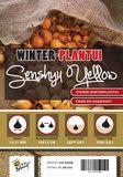 Winter plantuien kopen, Yellow Senshyu | Moestuinland