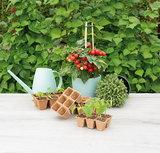 Sfeerfoto kweekpotjes kopen kweken en tuinieren   Moestuinland