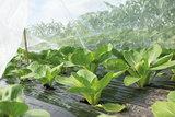 Insectengaas SOGO kopen planten | Moestuinland