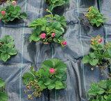 de aarde afdekken tegen onkruid met antiworteldoek bij moestuinland