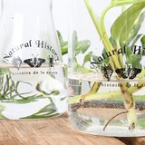 Sfeerfoto stekglas stekken esschert 300ml | Moestuinland