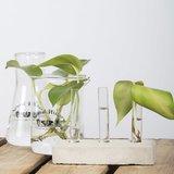 Bekerglas, Stek glas (500ml)_