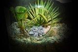 Plant terrarium sfeerfoto | Moestuinland