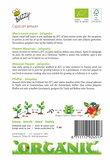 Beschrijving zaaien jalapeno zaden kopen   Moestuinland