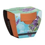 Lavendel Grow Gift weggevertje give-away | Moestuinland