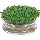 Kiemschaal, Sprouting Bowl | inclusief zaden _
