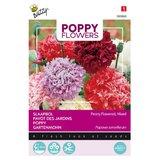 Slaapbol zaden kopen, Peony Flowered Papaver somniferum mixed | Moestuinland