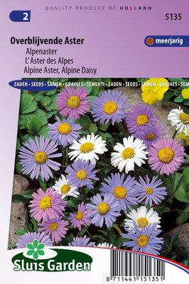 Aster, Alpenaster mix (Aster alpinus)