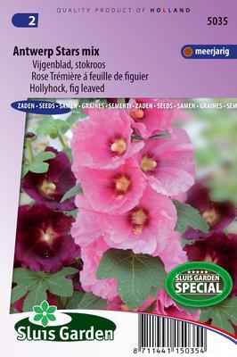 Stokroos zaden, Antwerp Stars mix (Alcea ficifolia)