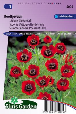 Kooltje Vuur zaden, Adonis Bloedrood (Adonis aestivalis)