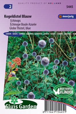Kogeldistel zaden, Blauw Echinops