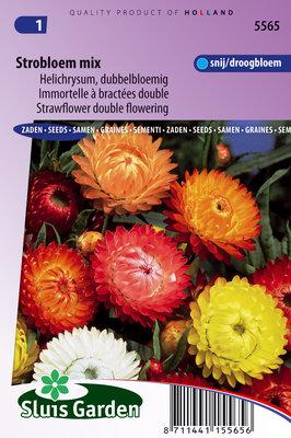 Strobloem zaden, Helichrysum mix