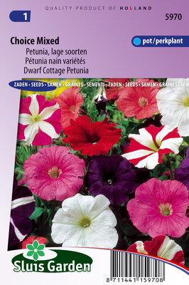 Petunia Zaden, Hybrida nana compacta (mix)