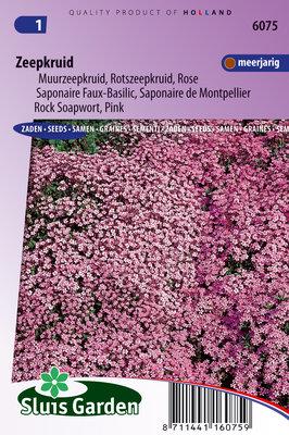 Zeepkruid Zaden, Saponaria ocymoides