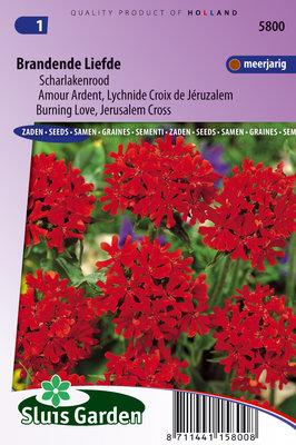 Brandende Liefde zaden, Lychnis chalcedonica