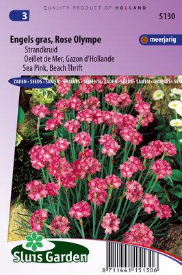 Engels Gras Zaden, Strandkruid (Rose Olympe)