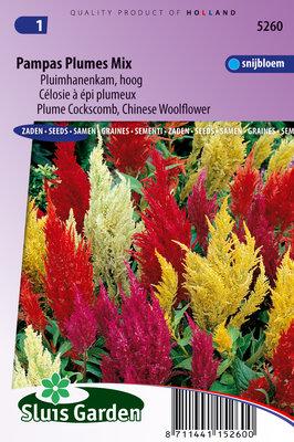 Pampas zaden, Plumes mix (Celosia)