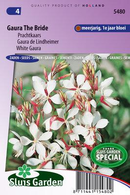 Prachtkaars zaden, Gaura lindheimerii