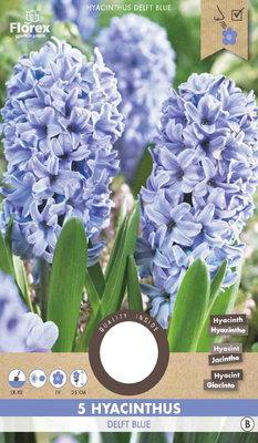 Hyacint Bloembollen, Delft Blue (najaar)
