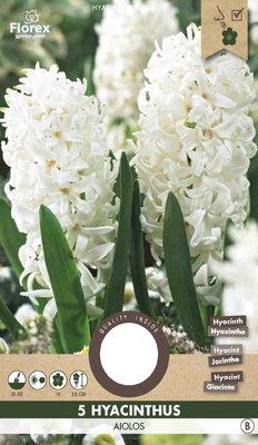 Hyacint Bloembollen, Aiolos White (Najaar)