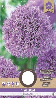 Allium Bloembol, Gladiator XXL (Najaar)