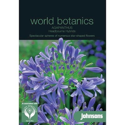 Agapanthus zaden, Headbourne Hybrids (Afrikaanse Lelie)