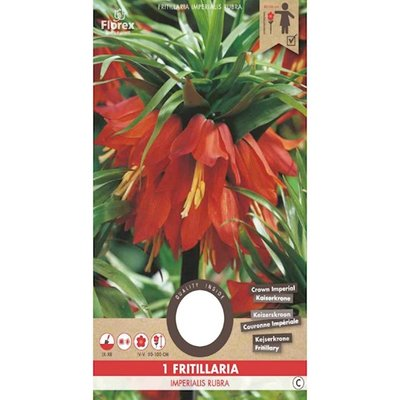 Keizerskroon bloembol, Fritillaria Imperialis Rubra