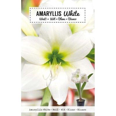 Amaryllis Bloembol, Wit