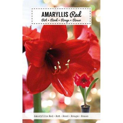 Amaryllis Bloembol, Rood