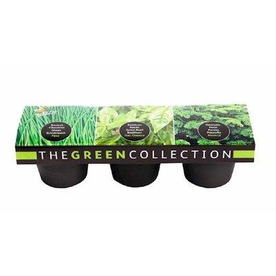 Groene Kruiden Collectie, 3 potten (Basilicum, Peterselie, Bieslook)