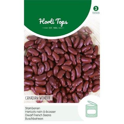 Bonen zaden, Kidney Canadian Wonder (Stamboon)