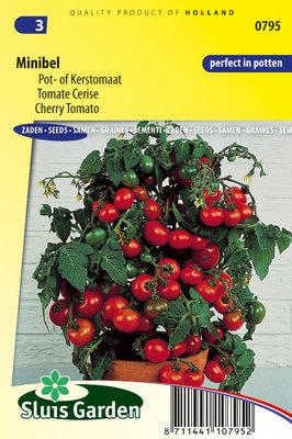 Tomaat Zaden, Minibel (tomaten)