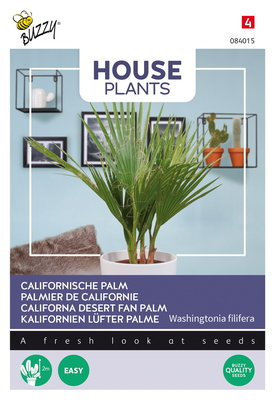 Californische Palm zaden, Washingtonia filifera