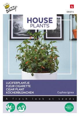 Luciferplant zaden, Cuphea ignea