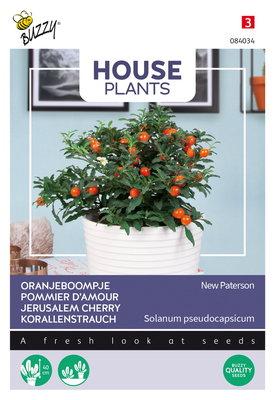 Oranjeboompje zaden, Solanum pseudocapsicum