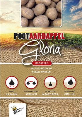 Pootaardappel, Gloria (1 kg)