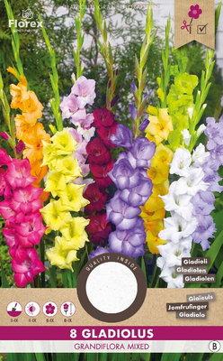 Gladiool bloembollen, Grandiflora mix (voorjaar)