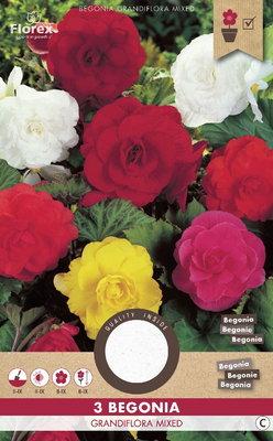 Begonia bloembollen, Dubbel Grandiflora mix (voorjaar)